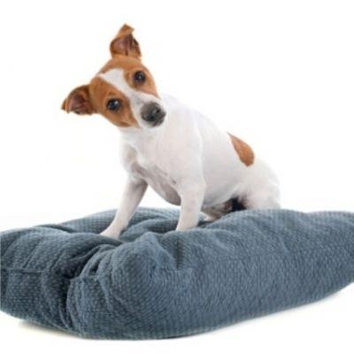 tutto per il riposo e trasporto del vostro animale