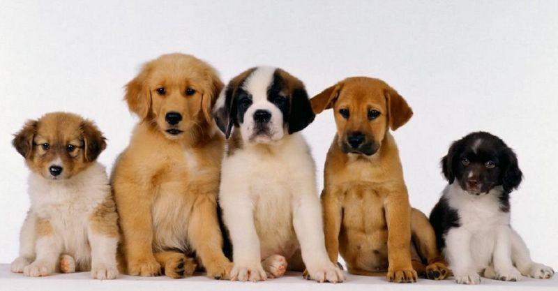 offerta negozio di toilettatura per cani - promozione vendita articoli e prodotti per animali