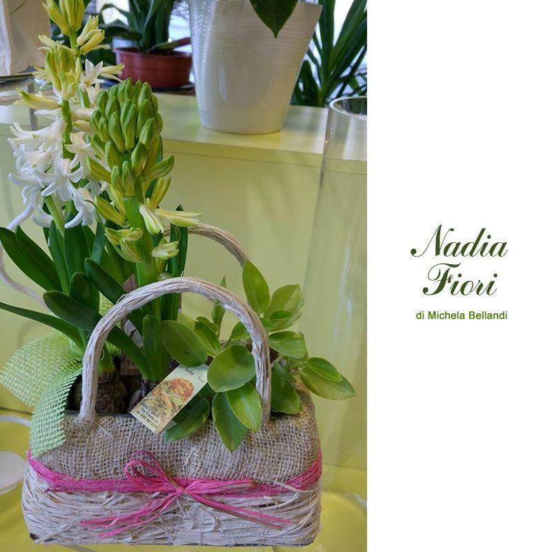 offerta occasione promozione giacinti profumati anche a domicilio fiorista nadia fiori brescia