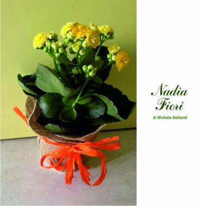 offerta kalandiva promozione piante grasse fiorite nadia fiori brescia