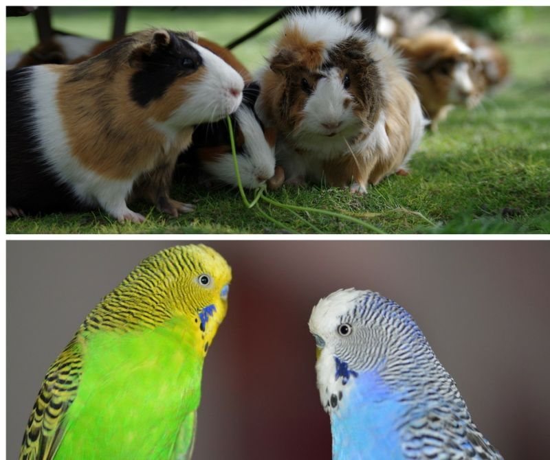 Offerta occasione piccoli animali mangime mangimi cura prodotti igiene agrisole crema
