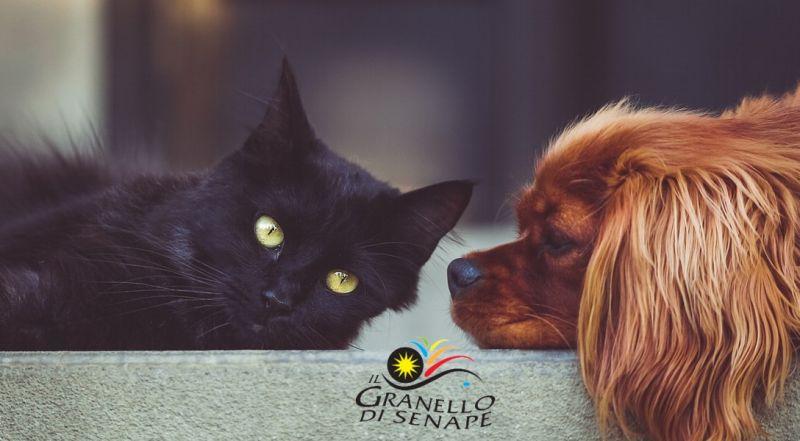 GRANELLO DI SENAPE - offerta vendita online prodotti per animali