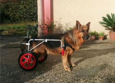 offerta carrello cani disabili promozione carrello per riabilitazione cani siena 101 mark