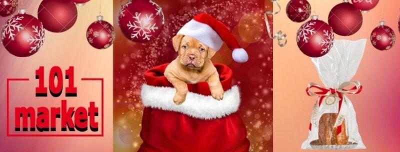 offerta prodotti natalizi per animali Siena e provincia - 101 MARKET