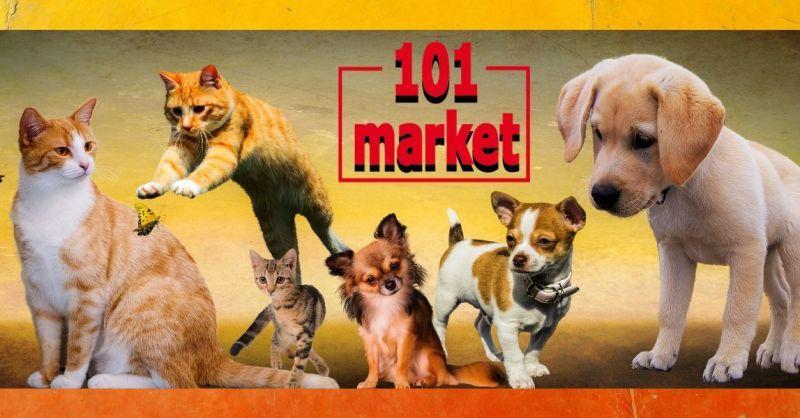 101 MARKET - occasione negozio di alimenti e articoli per animali