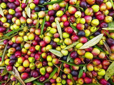 olio extravergine di oliva frantoio amendolagine