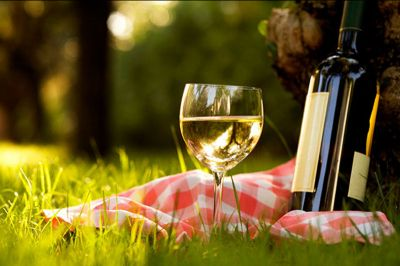 offerta vendita vino doc friuli venezia giulia occasione vendita vini sfusi e grappe trieste