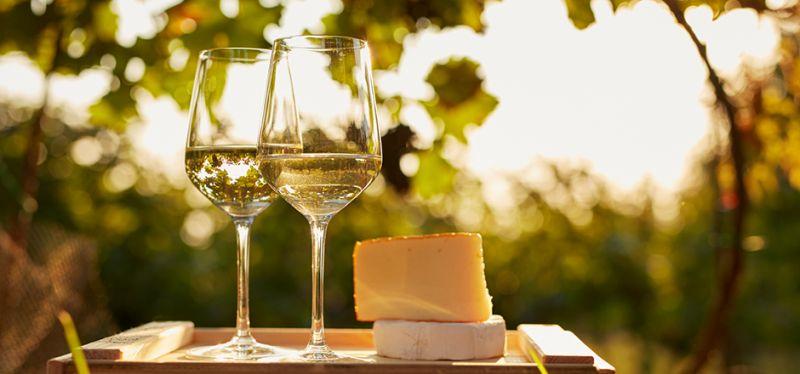 offerta vendita vino sfuso doc friuli venezia giulia - occasione vendita vino e grappe trieste