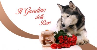 offerta servizio cimitero per animali piccole e medie taglie a cuorgne il giardino delle rose