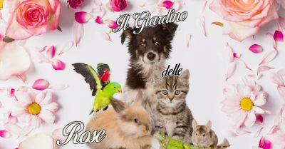 offerta vendita tombe per cimitero animali a cuorgne il giardino delle rose