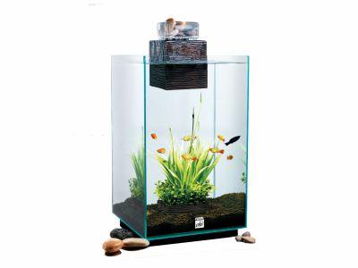 aquario askoll fluval chi 25