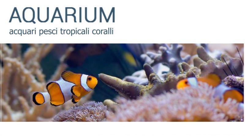 offerta vendita acquari e accessori a macerata - occasione vendita pesci tropicali coralli mc