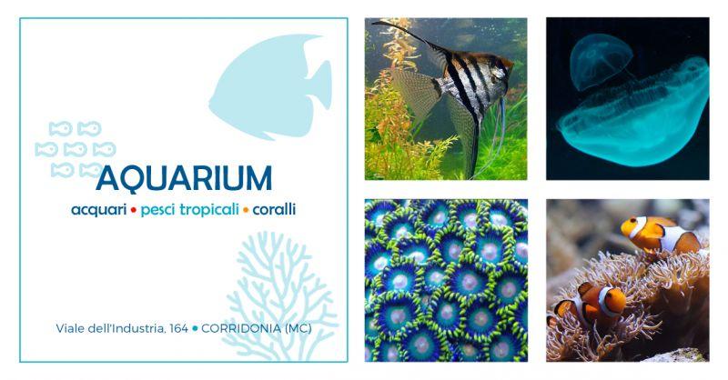 offerta negozio specializzato acquari macerata - occasione vendita pesci tropicali macerata
