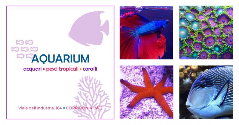offerta manutenzione acquari macerata - occasione assistenza specializzata acquari macerata