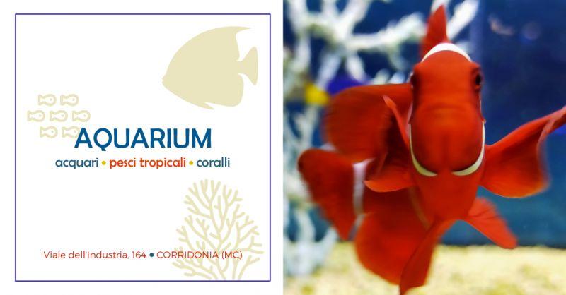 Offerta Vendita Pesci Acquario Macerata - Offerta Vendita Piante Acquario Corridonia