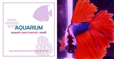 offerta vendita accessori acquario macerata occasione vendita accessori acquario corridonia