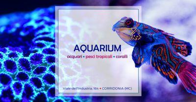 offerta negozio acquariologia specializzato occasione vendita pesci invertebrati acquario macerata