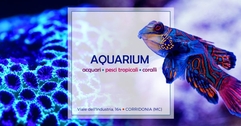 Offerta Negozio Acquariologia Specializzato - Occasione Vendita Pesci Invertebrati Acquario Macerata