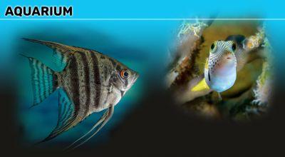 offerta vendita coralli e di pesci tropicale macerata promozione coralli e pesci per acquari macerata