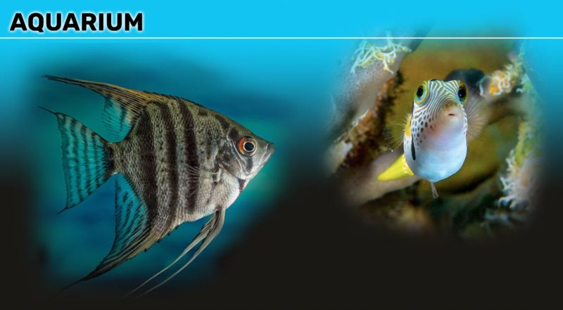 Offerta vendita coralli e di pesci tropicale macerata - promozione coralli e pesci per acquari macerata