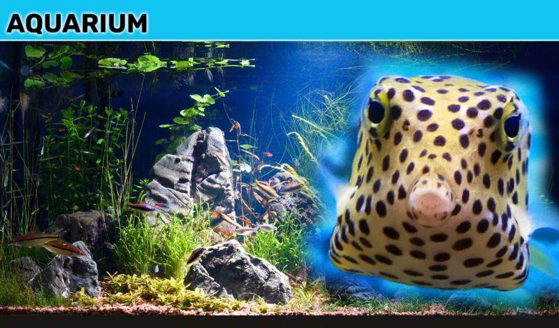 Offerta vendita invertebrati e pesci tropicali macerata - promozione pesci tropicali per acquari macerata