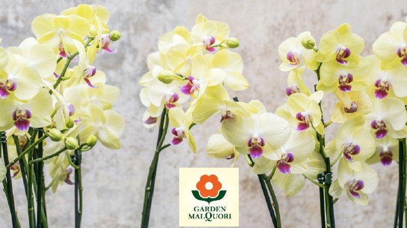 offerta vivaio poggibonsi - promozione vendita piante e fiori poggibonsi