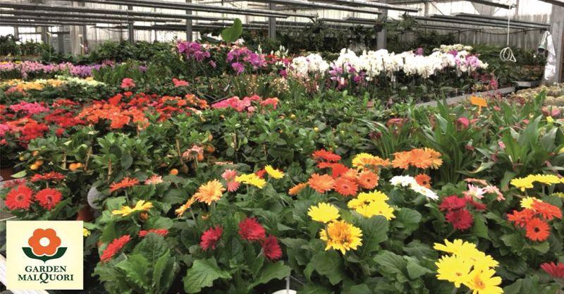 GARDEN MALQUORI - occasione vendita accessori e prodotti per il giardinaggio e arredo giardino