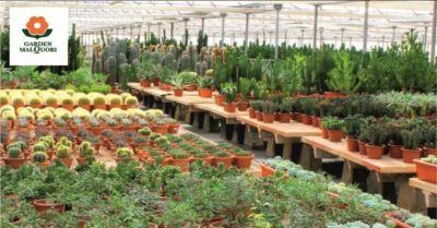occasione vendita piante e attrezzature per il giardino garden malquori