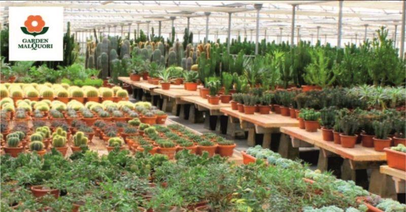 occasione vendita piante e attrezzature per il giardino - GARDEN MALQUORI