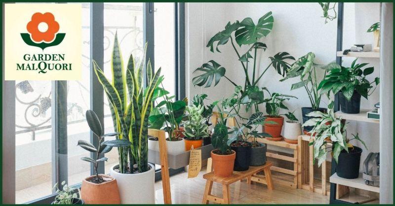 promozione piante da interno ideali per abbellire il soggiorno di casa - GARDEN MALQUORI