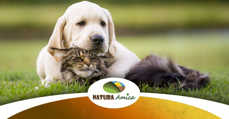 Offerta Vendita Antiparassitari Cane Gatto Loreto - Occasione Vendita Antiparassitari Naturali Loreto