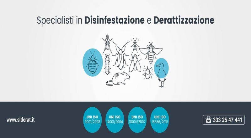 Siderat offerta disinfestazione - occasione derattizazione e trattamenti contro insetti Catania