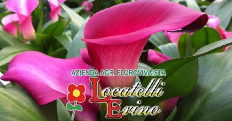 AZIENDA AGRICOLA FLOROVIVAISTA LOCATELLI offerta piante per arredo – promozione fiori arredamento