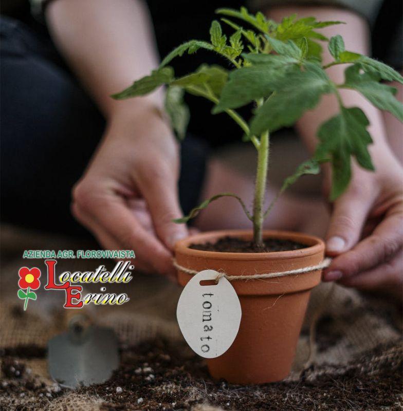 AZIENDA AGRICOLA FLOROVIVAISTA LOCATELLI offerta orto pensile – promozione orto in balcone