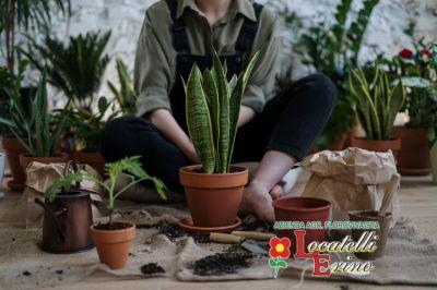 azienda agricola florovivaista locatelli offerta piante verdi arredo interni verde domestico