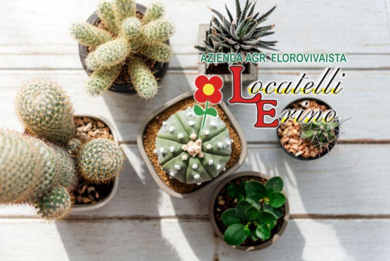 AZIENDA AGRICOLA FLOROVIVAISTA LOCATELLI offerta piante grasse – promozione piante succulente