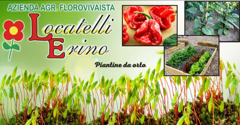 offerta piantine da orto Bergamo - occasione piantine da trapianto Ambivere