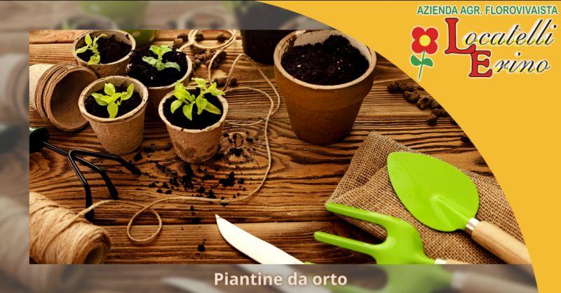 Offerta vendita piantine orto Bergamo - occasione vendita piantine da trapianto Ambivere