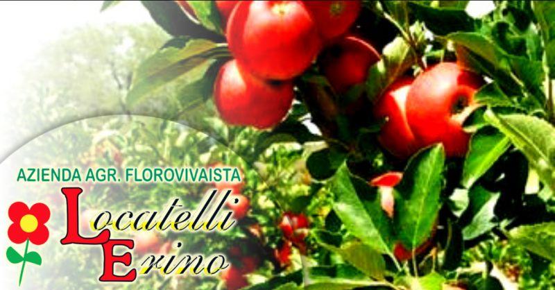 Offerta vivaio vendita piante da frutto Bergamo - occasione vivaio piccoli frutti Ambivere