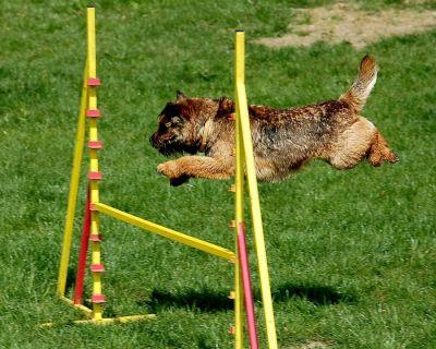 offerta scuola addestramento cani scuola educazione gentile cane dog school nicosia