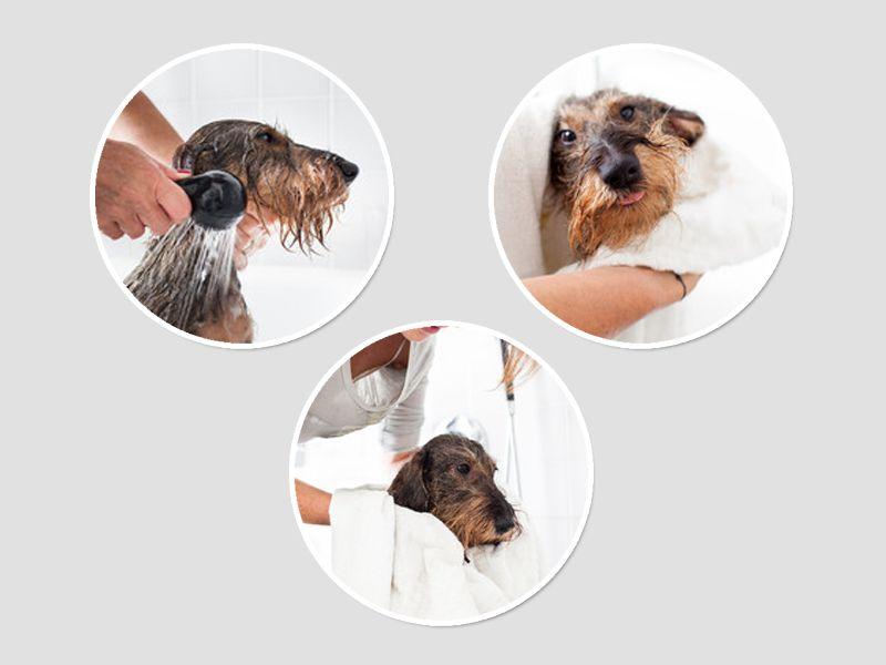 promozione toelettatura offerta rende occasione cani