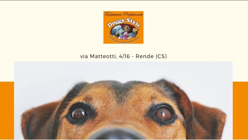 Offerta royal canin cosenza - offerta advantix cosenza - offerta almo nature cosenza