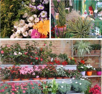 promozione vendita fiori offerta fiori cerimonie jack di fiori