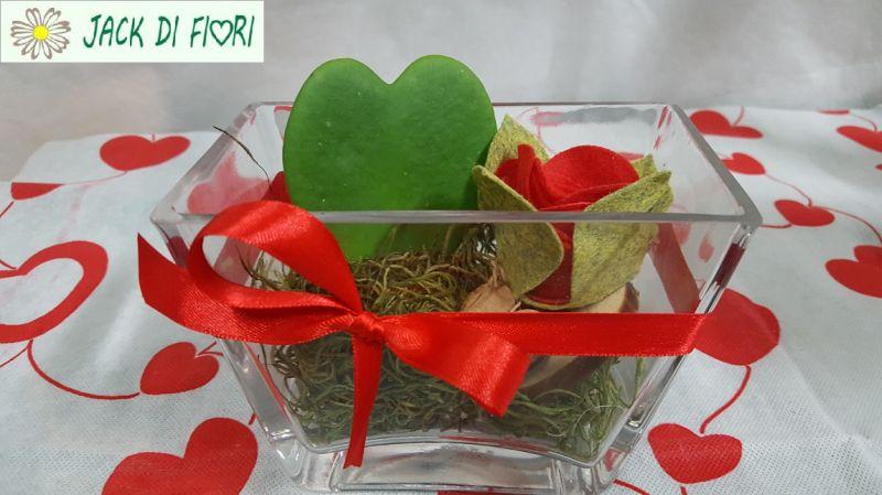 offerta piante san valentino Siena  - promozione idee regalo san valentino Siena