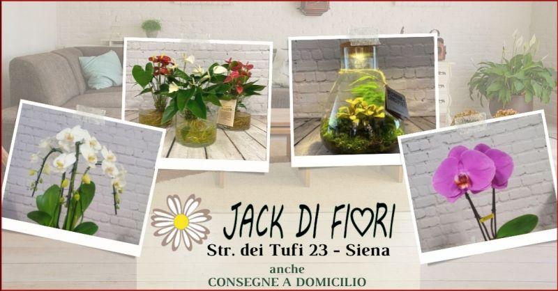 offerta piante e composizioni floreali autunnali per arredo casa Siena - JACK DI FIORI