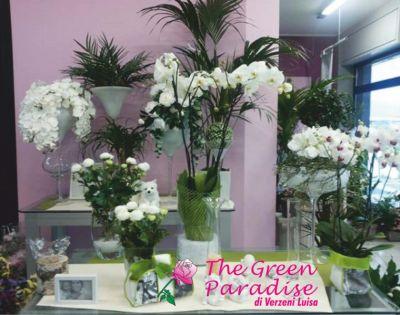 the green paradise offerta vendita piante promozione allestimenti floreali per cerimonie