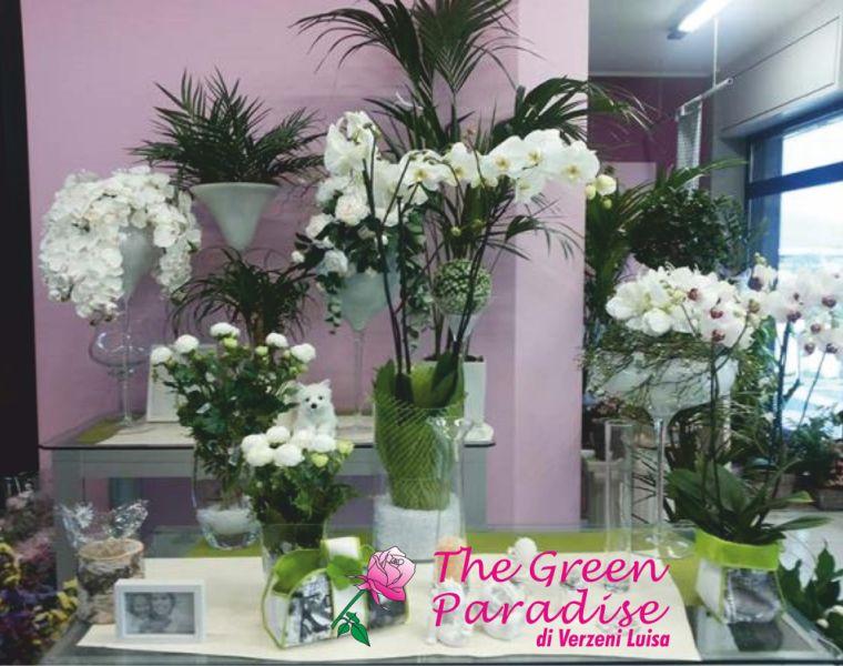 THE GREEN PARADISE offerta vendita piante - promozione allestimenti floreali per cerimonie