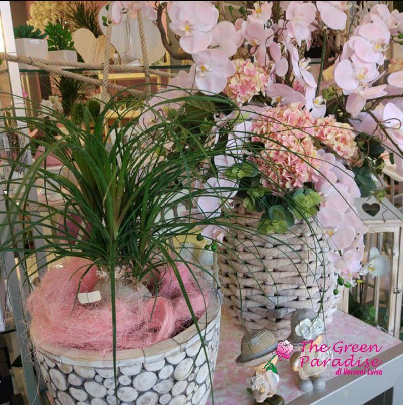 THE GREEN PARADISE offerta piante ornamentali - promozione fiori da appartamento