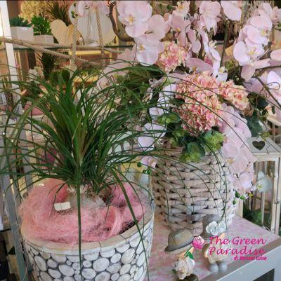 the green paradise offerta piante ornamentali promozione fiori da appartamento