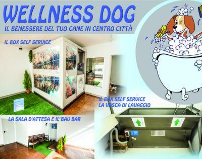 lavaggio self service cani h24 toelettatura